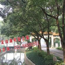 青浦陵园朱家角附近殡葬公墓淀山湖墓园上海排名最好的公墓
