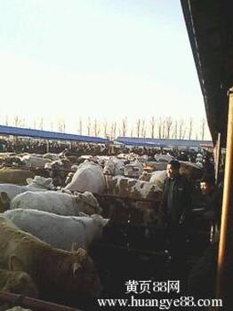 东北牲畜交易网