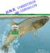 二维码溯源鱼吊牌