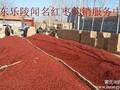 2014乐陵小枣产地收购价格偏低图片