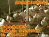 河北发酵床养鸡原种制作30厘米发酵床养鸡方法为例
