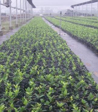 【UPVC农用水管_东阳UPVC农用水管生产厂家_UPVC排水管价格|图