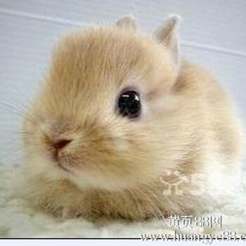 陶白伯兔业养殖基地超级可爱的小兔兔