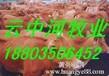 华北地区肉牛养殖外调办公室