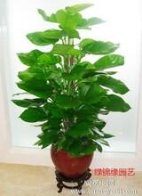 总部基地绿植花卉租赁、绿植租摆服务、北京绿锦缘园艺公司