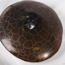 龟裂纹陨石