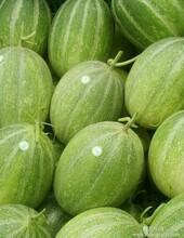 嘎啦苹果-山东沂水嘎啦苹果到7月初就上市了欢迎到山东顺祥瓜果基地选购还销售西瓜甜瓜油桃等水果