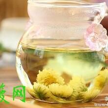 菊花茶可以减肥吗