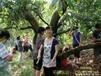 2013年苏州西山采杨梅活动--西山农家乐信息网