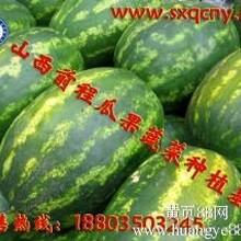 山西省忻州市最大的西瓜甜瓜种植基地7月份大量批发供应
