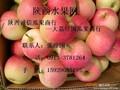 嘎啦苹果价格供应嘎啦苹果求购嘎啦苹果图片
