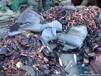废旧聚合物电芯/铝壳电芯/各种废旧电芯/电池及电池废材料/钴酸锂