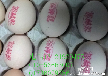 想在哈尔滨买好的鸡蛋喷码机吗?就买安格映科鸡蛋喷码机,效果好,质量有保障