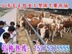 唐山肉牛羊养殖场#