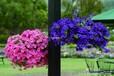 花园设计花卉租赁花园造型草花出租