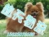 广州宠物托运狗狗猫咪火车托运