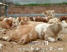 忻州小肉牛价格