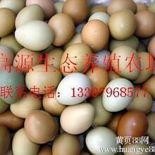 七彩山鸡蛋野鸡蛋