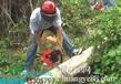 广州市园林绿化工程广州市砍树工程广州挖树工程广州修剪草坪
