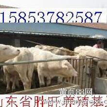 什么牛养殖空间大