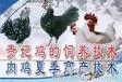 贵妃鸡养殖技术大全贵妃鸡饲养管理技术视频如何养殖贵妃鸡
