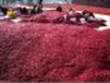 中国新疆干红辣椒