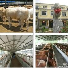 什么地方有肉牛养殖场啊
