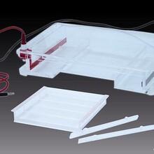 现货供应六一DYCP-31F琼脂糖水平电泳仪(大)图片