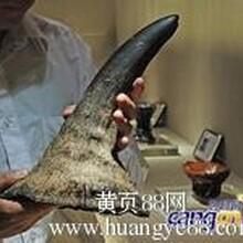 绍兴犀牛角雕鉴定就找香港时代国际拍卖公司