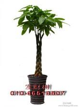 2016北京的花卉绿植养护公司