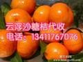 云浮沙糖桔批发代收,最优价格,全国_白银客商可联系图片