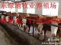禄劝县养殖肉牛若干问题图片