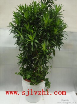 北京绿植租摆价格