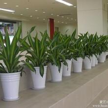北京绿植租赁公司
