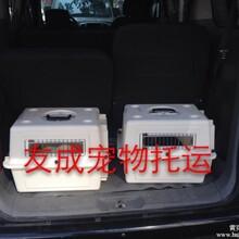北京到香港澳门台湾宠物托运信誉好的公司图片
