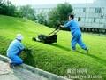 苏州厂区绿化养护苏州绿化养护-首选苏叶图片