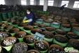 上海电子厂垃圾回收公司,上海专业回收报废电子芯片,上海电子集成块回收价格,上海回收电子厂家