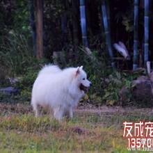 狗狗猫咪经香港回国转北京上海武汉图片