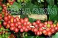 咖啡豆批发零售厂家