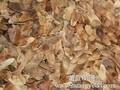 五角枫种植技术图片