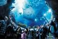 香港海洋公园旅游简介