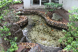 云南省昆明市最专业的锦鲤鱼池景观净化水处理专家