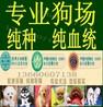 广州白云区哪里有卖狗广州哪里有宠物狗