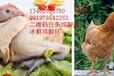 定做浙江白条鸡专用二维码溯源防伪鸡脚环手机扫描二维码可查询养殖加工信息