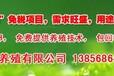 亳州土元养殖效益分析