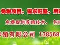 亳州土元市场价格图片