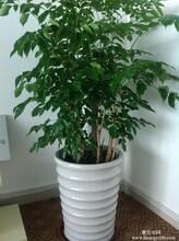 赣州植物租赁、赣州绿植租赁