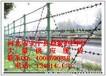 厂家批发刺绳护栏网生产刺绳护栏网监狱护栏网价格—安平鼎振护栏网厂