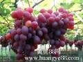 2015年陕西红提葡萄批发供应价格图片