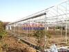 单体温室大棚工程_上海农程温室设备公司专业建造各种温室